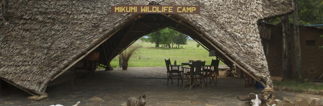 Mikumi wildlife camp 2
